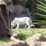 Bilde fra Loro Parque