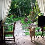 Friendly Dogs welcome guests to breakfast at the dining area