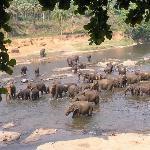 At elephant orphanage
