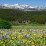 Wildflowers and Ranch View