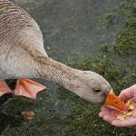 Keswick Wildlife:)