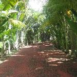 Red Brick Road (going down to our beach)