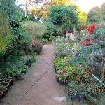 Gorgeous Rose Gardens Homestay