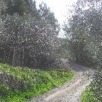 L'Alivu Foto