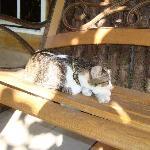 Dino - Xanadu's house cat