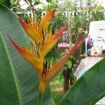 tropical garden at Sabuy