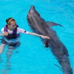 swimming with Kimba the bottlenose