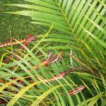 beautiful vegetation and butterflies