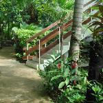 Coral Motel garden
