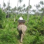 A zonzo nella giungla