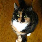 Peru, the most adorable watch cat. . . LOVED HER TOO!