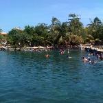 Dolphin in Puerto Aventuras