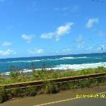 See the whole island of Maui on the trip to the rainforest