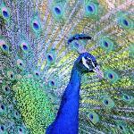 Virginia Zoo Foto