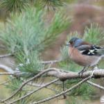 Small bird in RSPB reserve