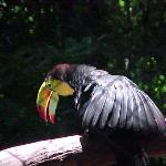 Zoológico  Chiapas