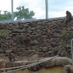 Monkeys in tha park