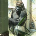 Zoo Knoxville Image