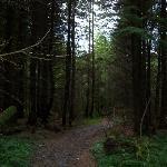 Magical walks through woodlands and streams
