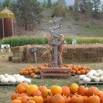 pumpkins, hay maze and corn maze