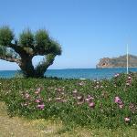 på väg till Agia Marina