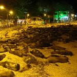 Sea Lions gather at night a short walk from the hotel