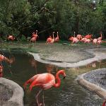 Riverbanks Zoo and Botanical Garden Foto