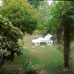 The beautiful hotel garden