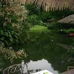 The pond by the restaurant