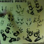 primate prints
