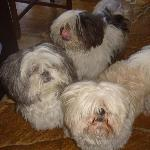 Cachorrinhos companheiros