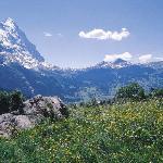Summer in Grindelwald