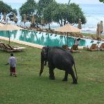 Elephant in the hotel!