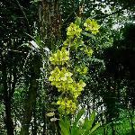 el refugio orchids