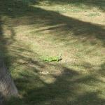 Lots of friendly small iguanas on the site