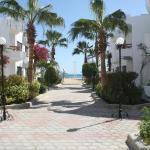 Photo of Marlin Inn Beach Resort