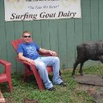 Chillaxin' at the Surfing Goat Dairy!
