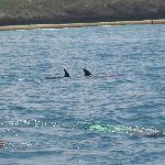 Massimo nuota con i delfini
