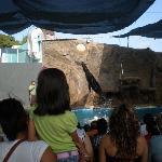 Sea lion show.