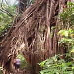 Ujung Kulon National Park