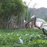 la réserve d'oiseaux sur le lagon