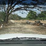 driveway to buena onda