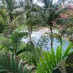 The Mopan River