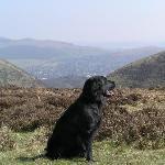 Our dog enjoying the Long Mynd!