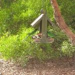 Parrots feeding in garden