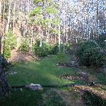 Forestview room- view of back property in April without leaves on trees