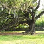 Audubon Park Photo