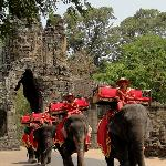 This year the elephants are wearing red