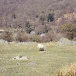 Bron Eryri in the valley way below Siabod