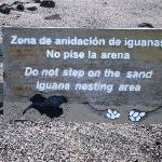 Marine Iquana Nesting area is a short walk to the beach